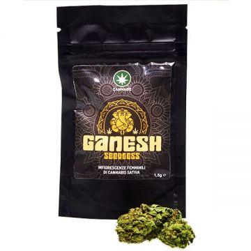 Ganesh SeedLess Cannabe - 1,5 Gr